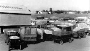Cotton Trucks