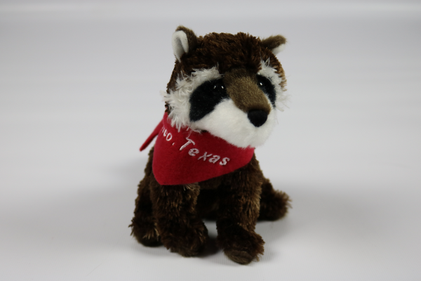 Raccoon with Frisco Scarf